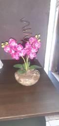 Vasos decoração