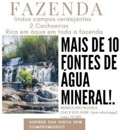 Fazenda +340 cabeças +Água Mineral