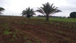 Rondônia fazenda Alto Floresta