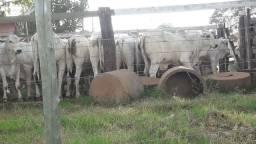 Vendo fazenda a 50 km de Bataguassu MS ,