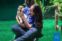 Filhote de Beagle - Kevin