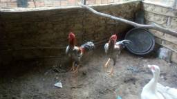 2 frango carioca