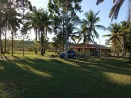 Fazenda 126 hectares -