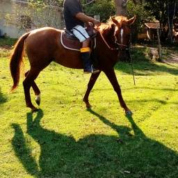Vendo cavalo quarto de milhar com manga larga ?