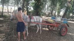 Vendo um burro
