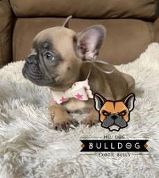 Femea bulldog frances
