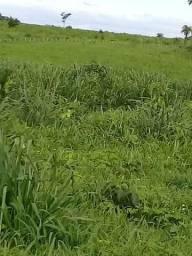 Fazenda Para Plantio de soja ou Pecuária 1410 hec