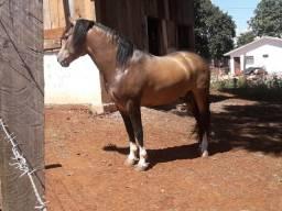 Coberturas.de cavalo crioulo e quarto de milha
