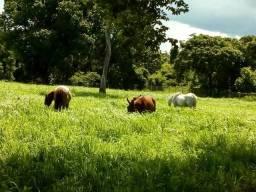 Fazenda beira do rio manso