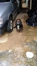 Procuro abrigo temporário para cachorro