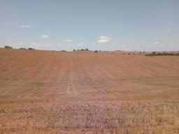 Vendo 51 hectares de terra