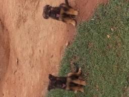 Filhotes com 2 meses