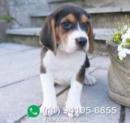 Beagle chamar no what's para informações *