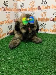 Lhasa Apso fêmea é no Da Madre Pet Shop