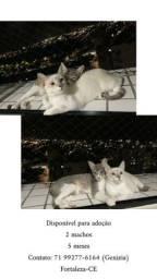 Dois gatinhos machos para doação