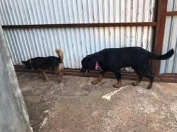 Título do anúncio: Doa-se Doação Cachorros Cães