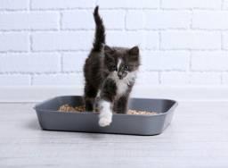 granulado higiênico para gatos e roedores