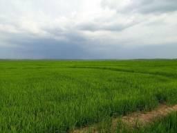 Produtiva fazenda km 17 da BR 319, 10 km fora da BR estrada de chão
