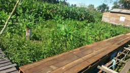Vendo terreno área de ressaca no multirão em santana med 10×20 int 991699727 ou 991024082
