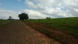Fazenda no Paraná 250 alqueires (Região de Cruzeiro do Oeste)