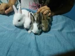Vendo filhotes de coelhos (faço entrega)