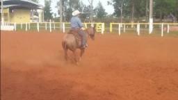 Treinador de cavalos (domador)