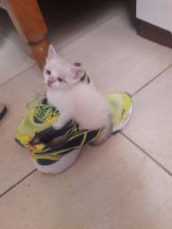 Doa-se 2 gatinhos irmão