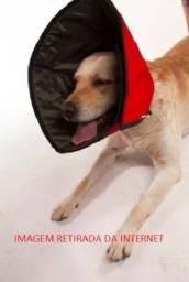 Colar Elizabetano Pet Med Conforto Para Cães E Gatos