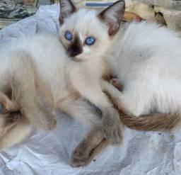 Doa-se essas belas gatas