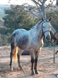 Cavalo se sela e charrete