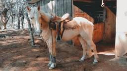 Título do anúncio: Cavalo BAIO