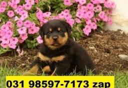 Canil Filhotes Cães Lindíssimos BH Rottweiler Pastor Labrador Golden Dálmata Akita Boxer