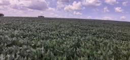 Título do anúncio: Fazenda em sacramento 862 hectares 25.000.000.00