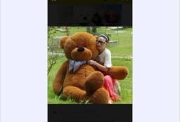 Urso de 2 metros