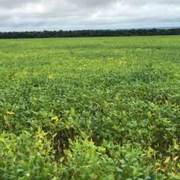 1985 hectares, 1250 hectares soja Brasnorte-MT, Entrada mais 06 anos