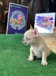 Mini Bulldog Frances Lilac Creme