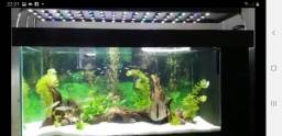 Vendo ou troco aquario completo 250 litros 1,16 ×50×50