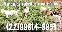 Venda de caprinos e ovinos