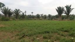 Vendo fazenda a 34km de PVH Sentido Humaitá