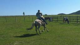 C M  Doma de cavalo