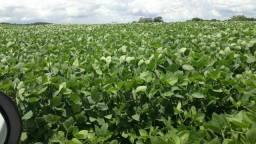 Fazenda à venda, 166 alqueires, - Mangueirinha - PR