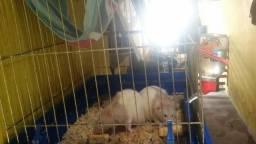 Doa se 2 ratos twister