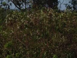 Fazenda 240,00 Hectares, Reserva do cabaçal-MT, aceita-se permuta