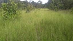 Fazenda 50 alqueires em formoso do Araguaia Região da mata seca
