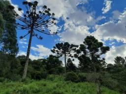 Título do anúncio: Sítio com linda vista entre Urupema e Rio Rufino