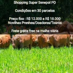 [[CO3]]Shop Senepol PO [Condições em 30x] Frete Free Grátis - Leia o anúncio