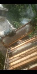 Mel de abelha puro 700 gramas