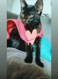 Título do anúncio: Doação gatinha carinhosa