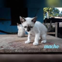 Doação de gatinhos - WhatsApp 93 991258542