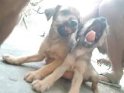 Cachoros